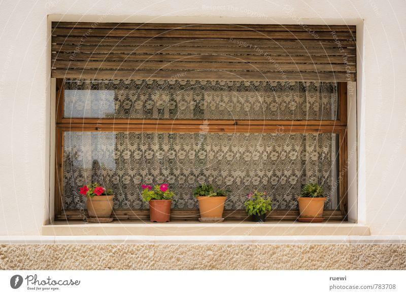 Kleingarten Freizeit & Hobby Häusliches Leben Wohnung Haus Garten Dekoration & Verzierung Fassade Fensterladen Fensterscheibe Gardine Gartenarbeit Frühling