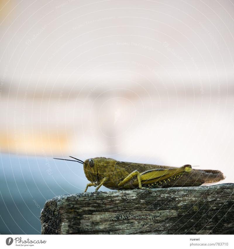 Hüüüü-hüpf. Ferien & Urlaub & Reisen grün Sommer Tier Herbst Frühling klein Holz sitzen warten groß Ausflug beobachten Abenteuer Insekt gruselig