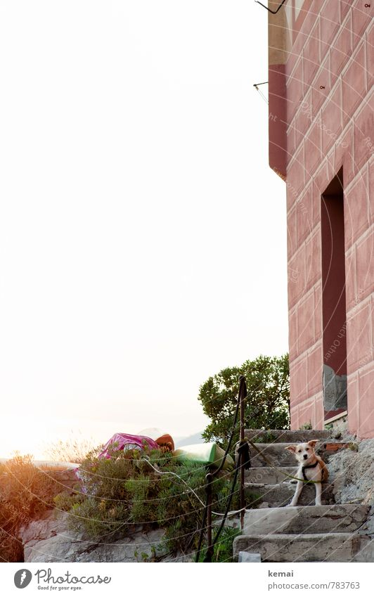 Italien - Land der Hunde Umwelt Landschaft Pflanze Sonnenaufgang Sonnenuntergang Sonnenlicht Sommer Schönes Wetter Mauer Wand Treppe Fassade Treppengeländer