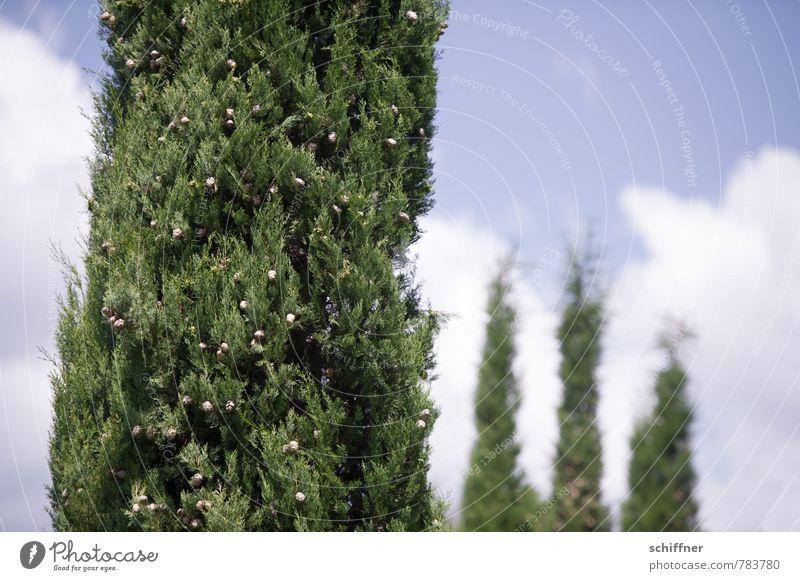 Silvio und die 3 Grazien Himmel grün Pflanze Baum Wolken Menschengruppe Sträucher mehrere Schönes Wetter 4 Grünpflanze Toskana Zypresse Gruppenzwang Gruppenfoto