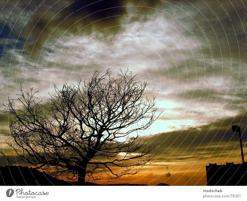 NACHTFALKEN Baum Himmel Wolken Herbst Silhouette Stimmung dunkel Sonnenuntergang Bla Wetter tree sky heaven clouds weather autumn fallen Traurigkeit
