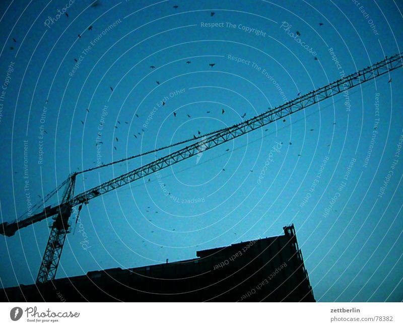 Palast der Republik Baustelle aufwärts Bildausschnitt Blauer Himmel Anschnitt Vogelschwarm himmelwärts Baukran Ausleger