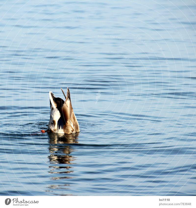 Tauchgang blau schön weiß Tier schwarz Bewegung natürlich grau Essen braun Stimmung orange elegant Wildtier Erfolg nass