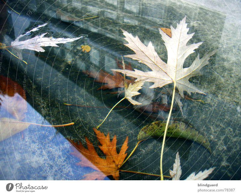 Novemberrain Reflexion & Spiegelung Pfütze Blatt Herbst Haus Fenster Abdeckung Dach mehrfarbig Vergänglichkeit Mauer Wand Regen trist kalt nass Gewitterregen