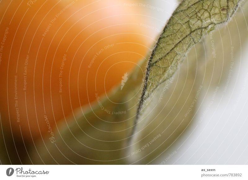 Physalis Natur schön grün Pflanze Farbe weiß ruhig Blatt Erotik Gesundheit orange Lifestyle Frucht Design Wachstum Dekoration & Verzierung