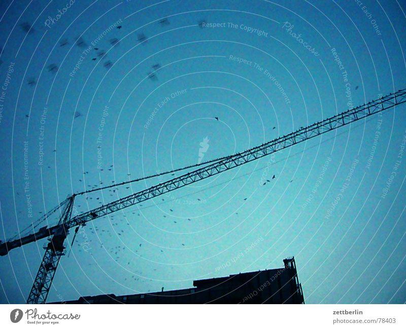 Palast der Republik (alt.) Blauer Himmel Baukran Silhouette Baustelle Vogelschwarm Textfreiraum oben Bildausschnitt Anschnitt Detailaufnahme aufwärts