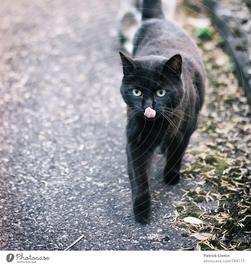 Nachbarskatz Katze Natur schön Freude Tier schwarz Umwelt Bewegung lustig Stil elegant laufen frisch Fröhlichkeit ästhetisch niedlich