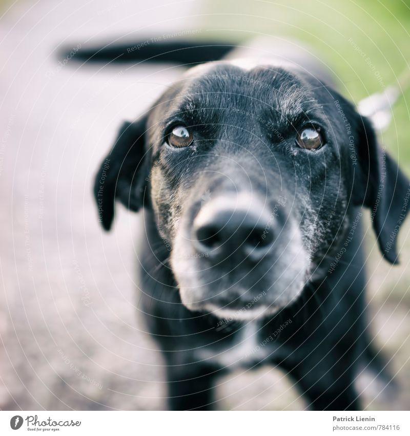 Nachbarshund Lifestyle Freizeit & Hobby Spielen Tier Haustier Hund Tiergesicht 1 authentisch einfach Freundlichkeit Fröhlichkeit frisch nah natürlich Neugier
