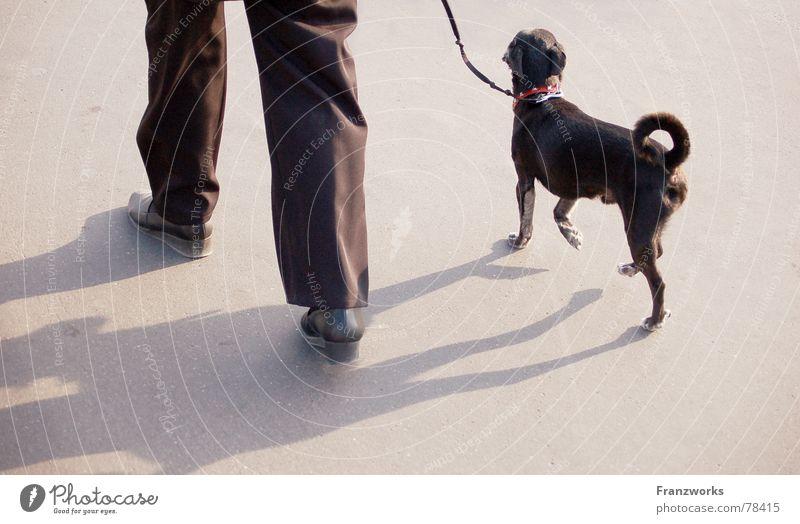 Trippelschwanz & Kringelbeinchen Hund stolzieren gehen trippeln Schwanz klein Gassi gehen Spaziergang Seil Schatten Beine elegant Straße Wege & Pfade