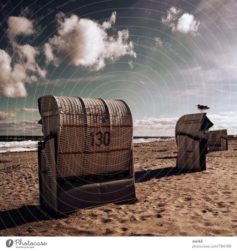 Vogelwarte Himmel Natur Ferien & Urlaub & Reisen Wasser Meer Landschaft Wolken ruhig Tier Strand Umwelt Sand Zusammensein Horizont frei Wellen