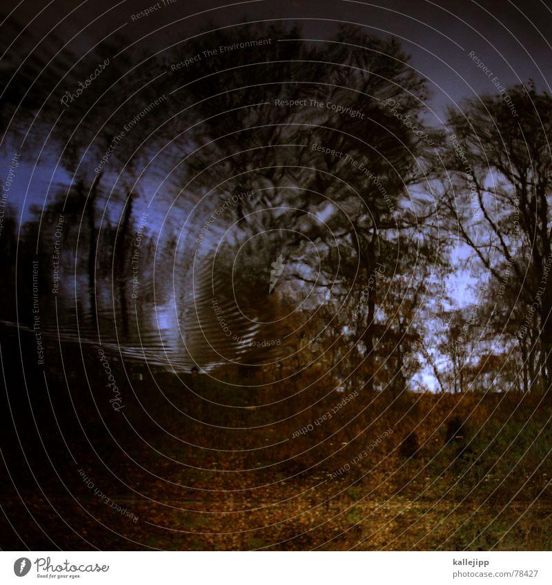 killesbergbaby II Himmel Baum Blatt Wolken Tod kalt Wärme Herbst See Park fliegen Feder verfaulen Physik Sturm Ente