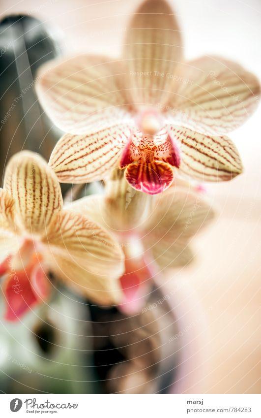 Von oben herab Natur Pflanze schön Erholung rot Blume ruhig Leben natürlich Zusammensein elegant leuchten authentisch frisch einfach Blühend