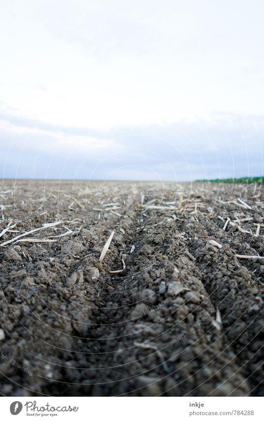 Acker Landwirtschaft Forstwirtschaft Umwelt Natur Landschaft Erde Himmel Horizont Frühling Sommer Schönes Wetter Feld Menschenleer frisch braun Ackerbau
