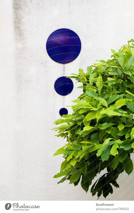 Tropfen fallen auf`s Blätterdach Umwelt Natur Pflanze Baum Blatt Haus Bauwerk Gebäude Mauer Wand Fassade Beton Zeichen Kugel dreckig blau grau grün weiß Design