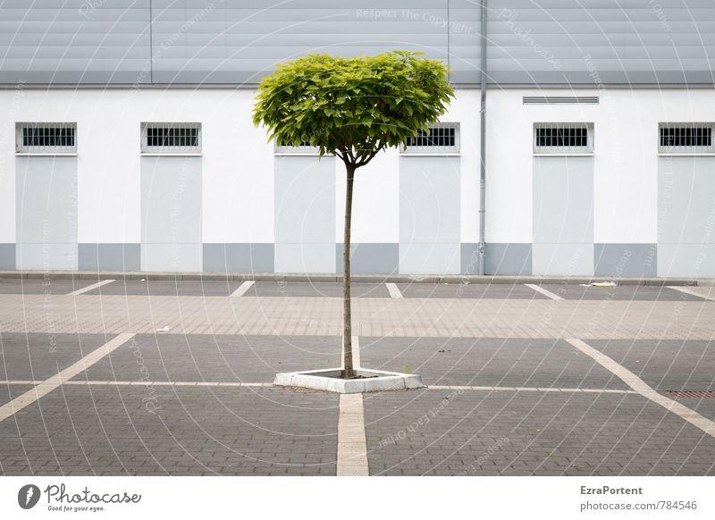 bodenständig / durchsetzen Natur Frühling Sommer Klima Pflanze Baum Stadt Haus Platz Bauwerk Gebäude Architektur Mauer Wand Fassade Fenster Verkehr Straße Stein