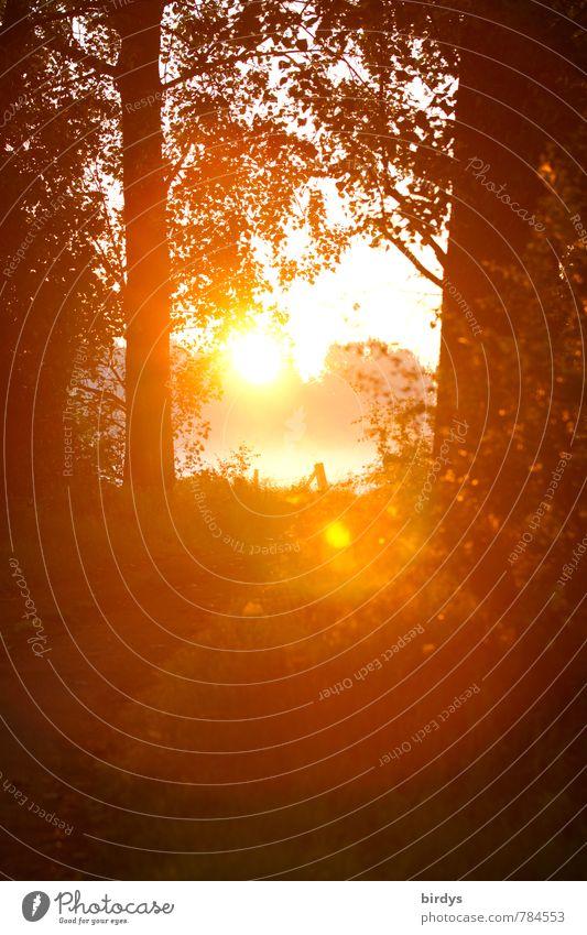 Lichtblick am Morgen Natur schön Sommer Baum Landschaft ruhig Wald gelb Wärme Frühling Stimmung orange Idylle leuchten ästhetisch Beginn