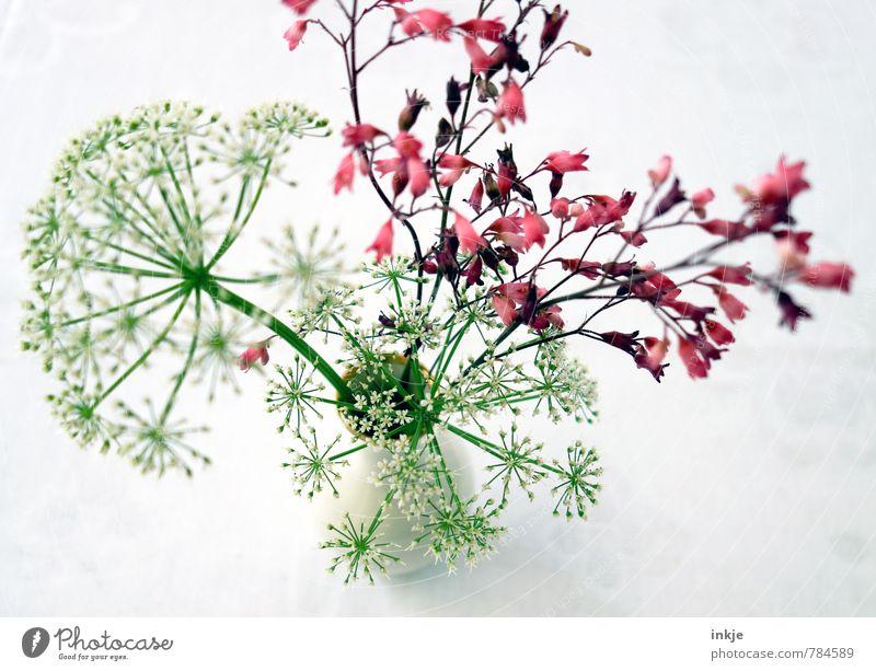 """""""Unkraut"""" gibt es nicht... Lifestyle Stil Freizeit & Hobby Häusliches Leben Dekoration & Verzierung Frühling Sommer Blume Blüte Blumenstrauß Giersch Blumenvase"""