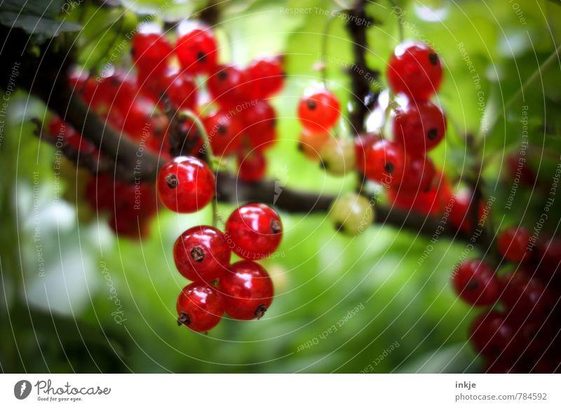 frisch Natur grün Pflanze Sommer rot Umwelt natürlich Garten Lebensmittel glänzend Wachstum Frucht Schönes Wetter Ernährung rund