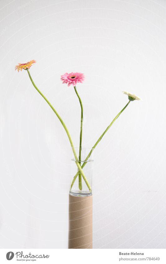 Ein Hauch von Gerbera Pflanze schön grün weiß Blume gelb Innenarchitektur Stil außergewöhnlich braun rosa Wachstum elegant Dekoration & Verzierung hoch ästhetisch