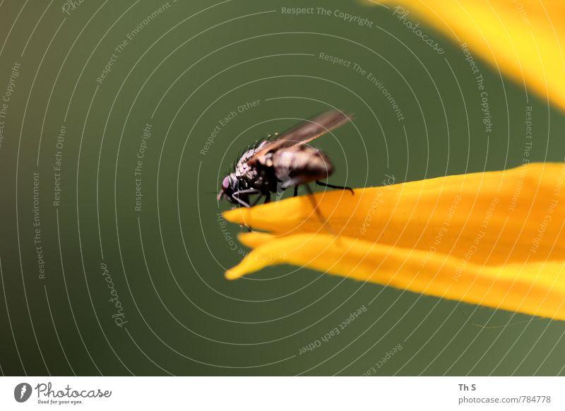 Fliege Natur schön grün Pflanze Sommer schwarz Frühling Blüte natürlich Freiheit orange elegant Wildtier authentisch Fröhlichkeit