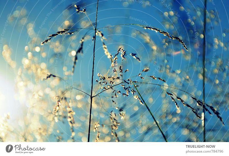 Silberlicht Natur Pflanze schön Wiese Gefühle Gras Liebe Blüte Glück Stimmung Kraft ästhetisch Schönes Wetter Kreativität Lebensfreude Ewigkeit