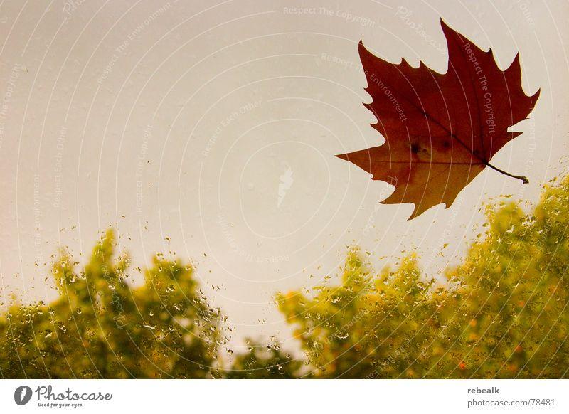 Herbst Schatten Natur Pflanze Wasser Himmel Wolken schlechtes Wetter Nebel Regen Gewitter Baum Blatt Fenster Glas Tropfen dunkel gelb grau grün rot schwarz