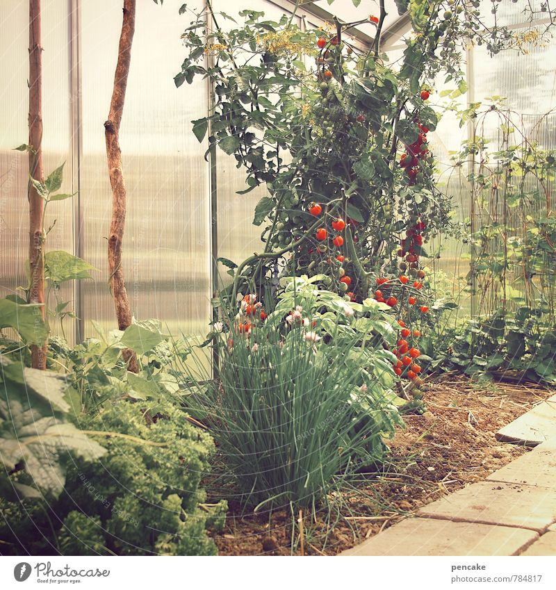 gewächshäusle Natur Urelemente Erde Sommer Pflanze Nutzpflanze Garten Hütte Gesundheit heiß Schutz Zufriedenheit Gewächshaus Tomate Bohnen Stab