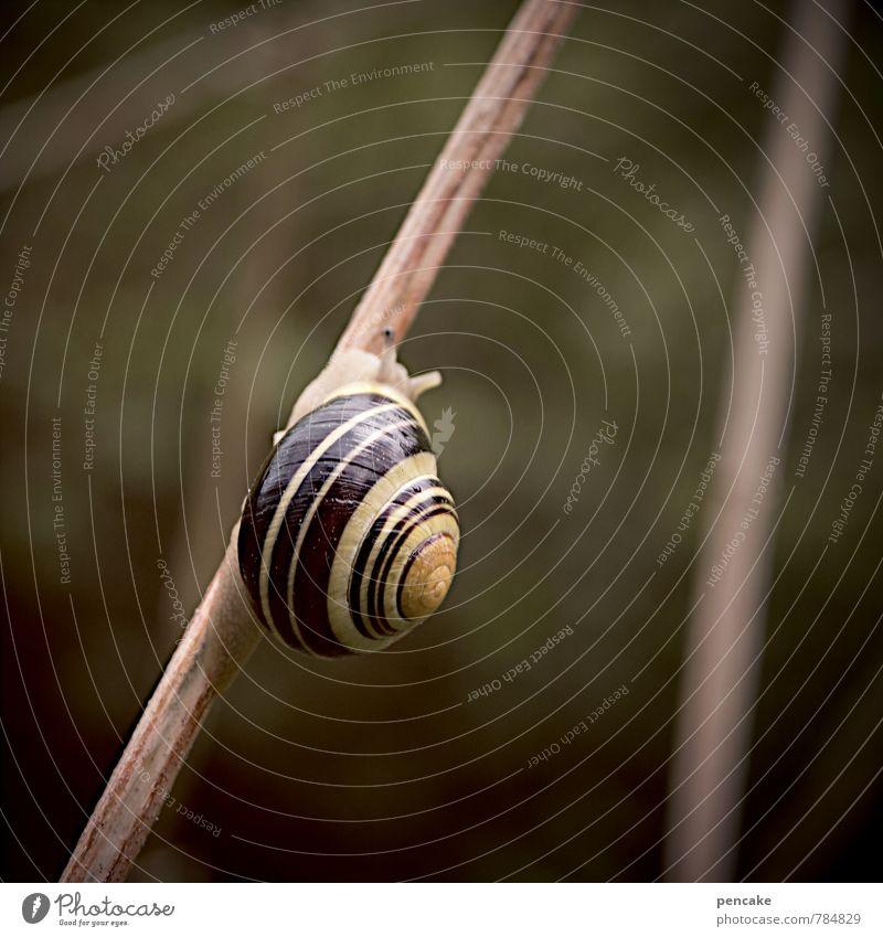 zeitlupe Natur Urelemente Tier Schnecke 1 Zeichen ästhetisch langsam Ewigkeit Zeitlupe Schneckenhaus Ast feucht krabbeln Warme Farbe dunkel Spirale Farbfoto