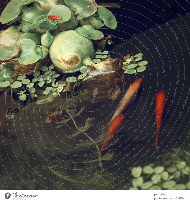 teichträume | dreierlei Natur Urelemente Wasser Sommer Pflanze Blatt Teich Tier Fisch 3 Zeichen Schwimmen & Baden ästhetisch Zusammensein Glück nass grün rot