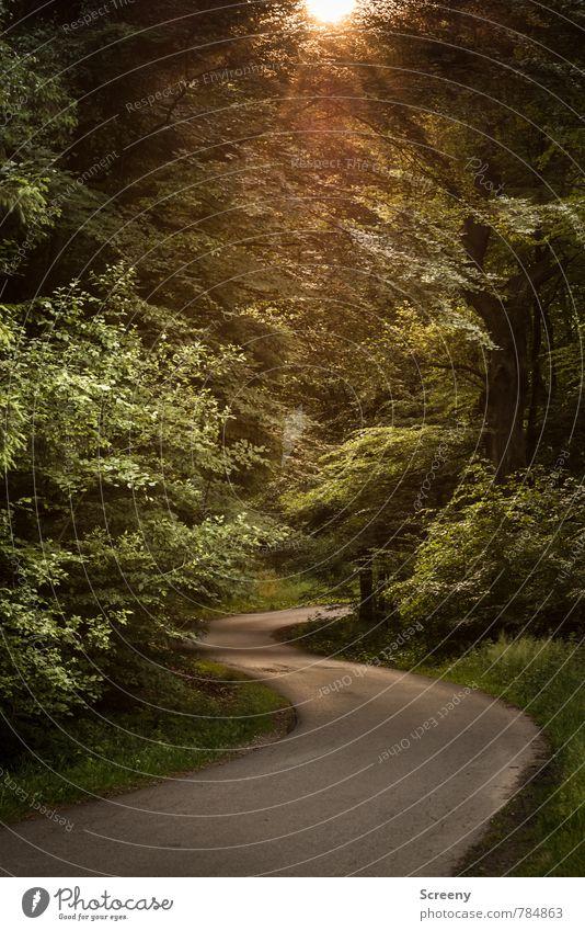 Heimweg Natur grün Pflanze Sommer Sonne Baum Landschaft ruhig Wald gelb Frühling Wege & Pfade Gras braun Deutschland Zufriedenheit