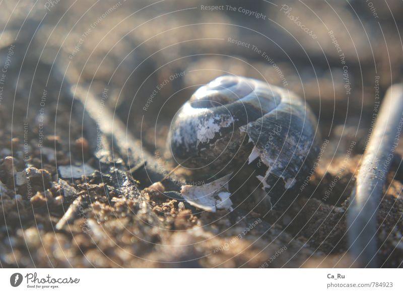 Ausgebrannt und unbewohnt alt weiß Einsamkeit dunkel Umwelt grau klein Holz Stein Sand braun Stimmung Häusliches Leben wandern Zukunft kaputt