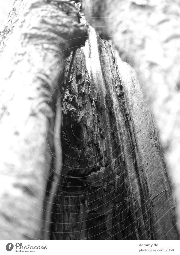 Baumstumpf matt Tod kaz