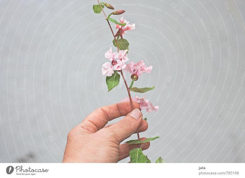 blume Mensch feminin Hand Finger Natur Pflanze Blume Blatt Blüte ästhetisch schön haltend Farbfoto Außenaufnahme Textfreiraum links Textfreiraum rechts