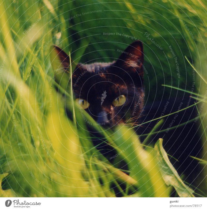 KATZEK träumen grün Katze Tier frisch Sommer Haustier schwarz