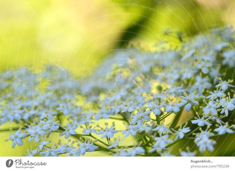 sommerlich... Natur grün weiß Sommer Erholung gelb Leben Frühling Blüte Garten Stimmung Kraft Zufriedenheit authentisch Schönes Wetter Kreativität