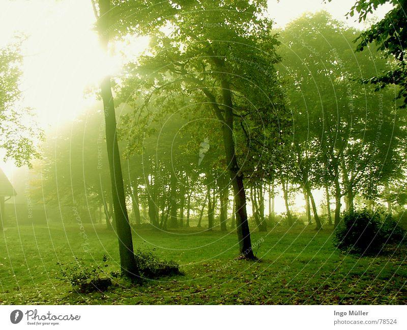 Frühling Baum Sonne grün Landschaft Nebel