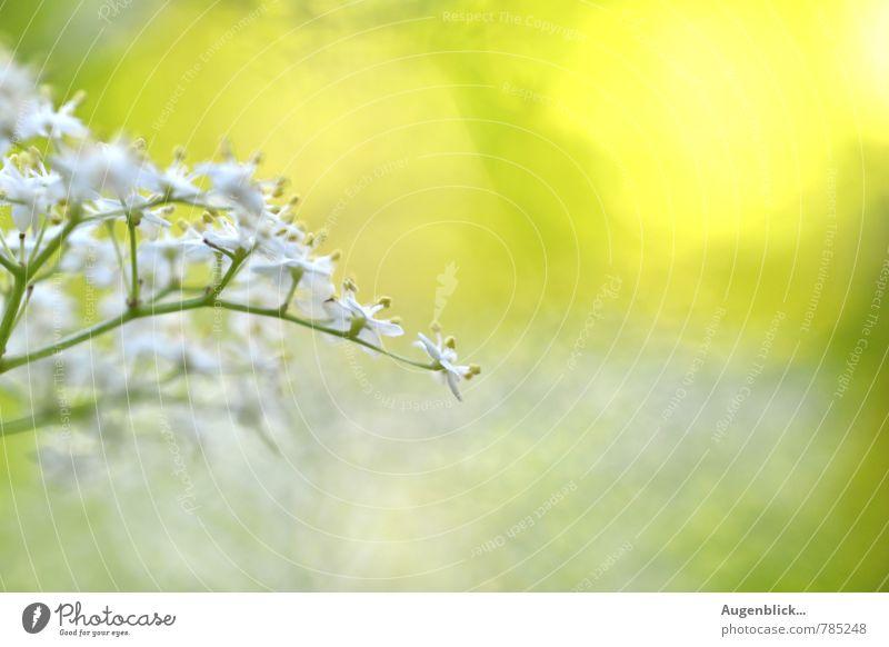 Sommer... Natur Sonne Sonnenlicht Frühling Schönes Wetter Wärme Blüte Garten Blühend Denken Duft Erholung genießen leuchten frei frisch glänzend Unendlichkeit