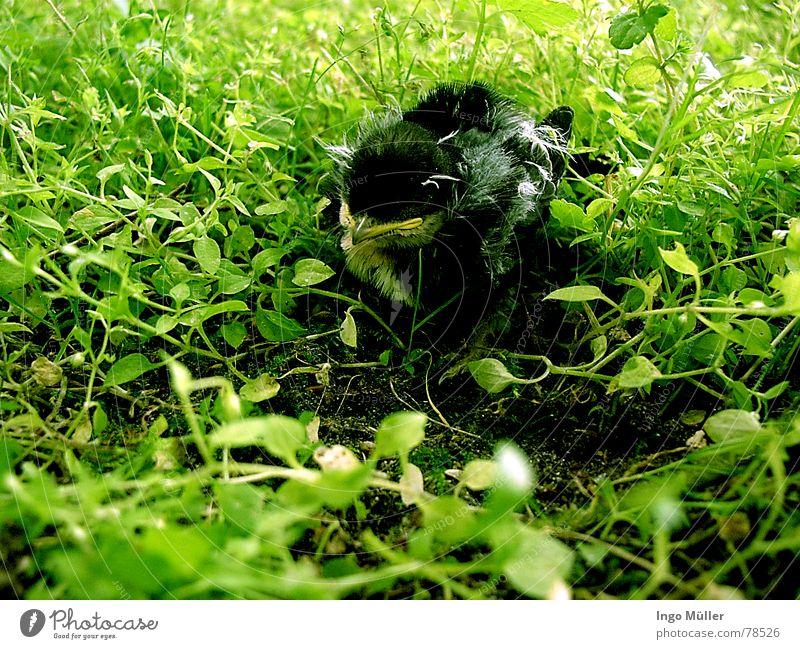 wo ist mein Nest? grün Tier Frühling Vogel Suche Bodenbelag verloren Nest