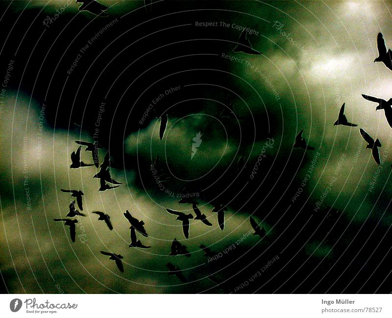 Der Blick nach oben Himmel Wolken Tier dunkel Vogel Tiergruppe Süden himmlisch