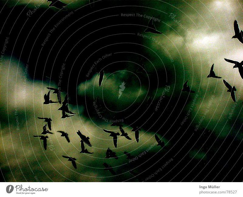 Der Blick nach oben Himmel Wolken Tier dunkel oben Vogel Tiergruppe Süden himmlisch