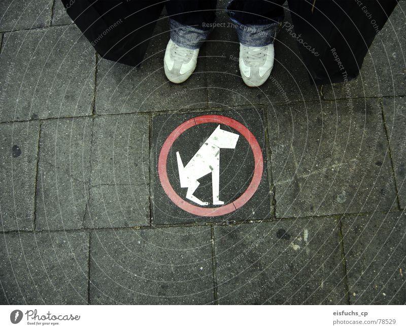 Armer Hund! Hund Stadt Straße Leben Wege & Pfade Freizeit & Hobby Schilder & Markierungen Dinge Hinweisschild Zeichen Bürgersteig Mitte Barriere unterwegs Vorsicht Respekt