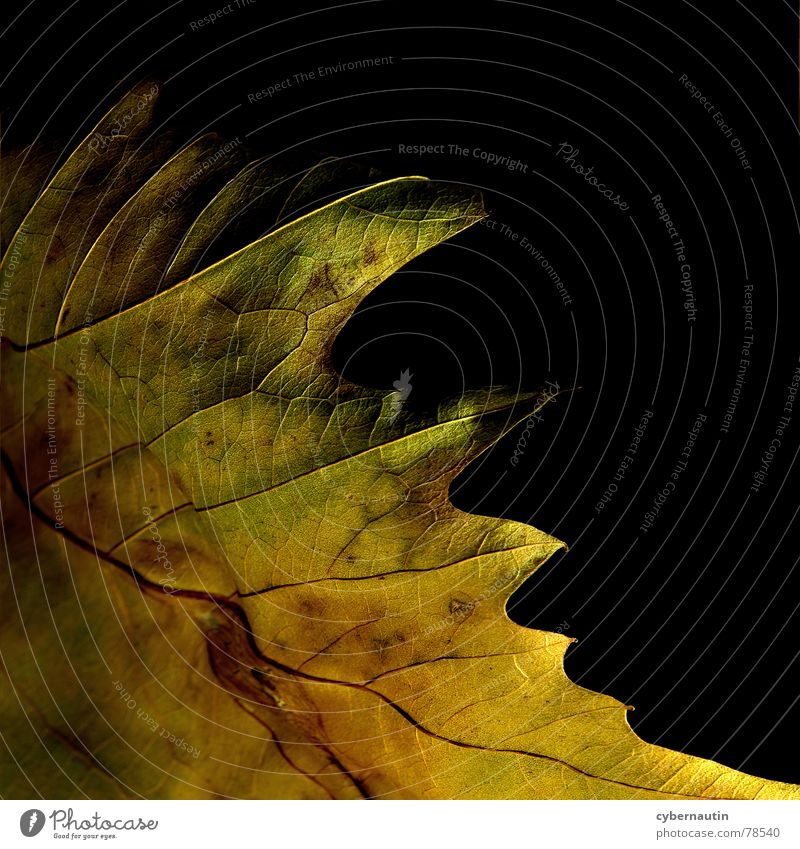 Herbstfarben Blatt Farbe Herbst