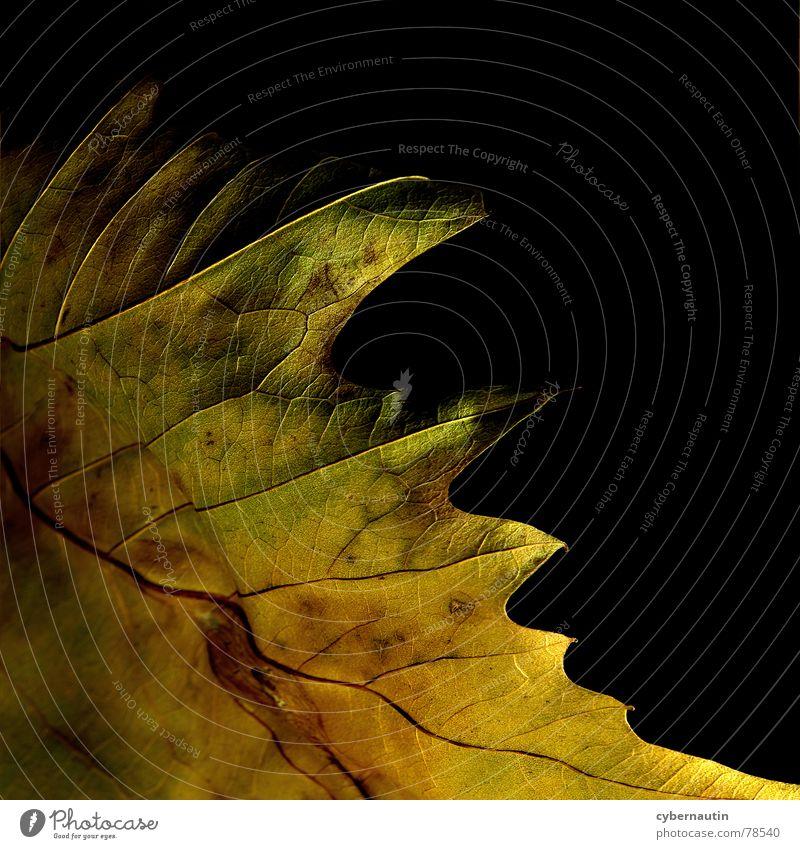 Herbstfarben Blatt mehrfarbig Makroaufnahme Nahaufnahme abstraktion blattstruktur Farbe Detailaufnahme