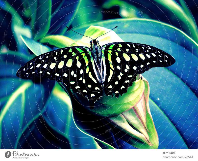 Pausen-Clown Natur blau grün schön Pflanze Sommer Freude Blatt ruhig schwarz Tier Farbe Erholung gelb Freiheit Gras