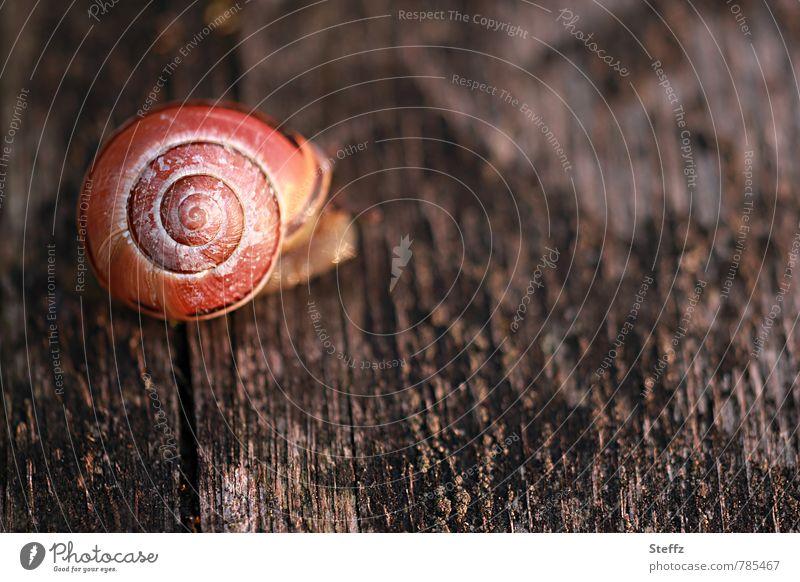 Holzbrett-Schnecke Natur Sommer Tier Leben braun orange Dekoration & Verzierung Lebewesen Spirale krabbeln Symmetrie langsam Schneckenhaus