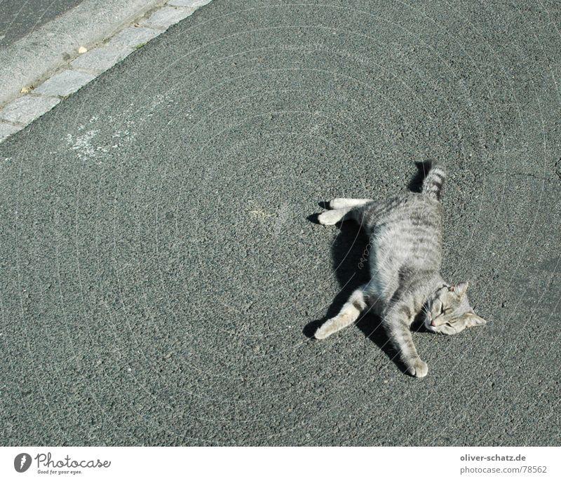 bad place to sleep schlafen Beton Katze grau groß heiß Tier Haustier Hoffnung Vertrauen Außenaufnahme Säugetier Straße Schönes Wetter Tod liegen Hauskatze Angst