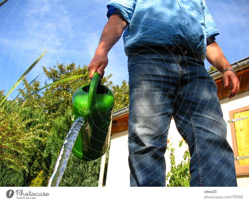 FlauerPauer grün feucht Gießkanne unten Wasserstrahl Gänseblümchen Gartenspritze Gartenhaus Löwenzahn Blüte Knollengewächse gießen Kannen Blume Sommer Strahlung