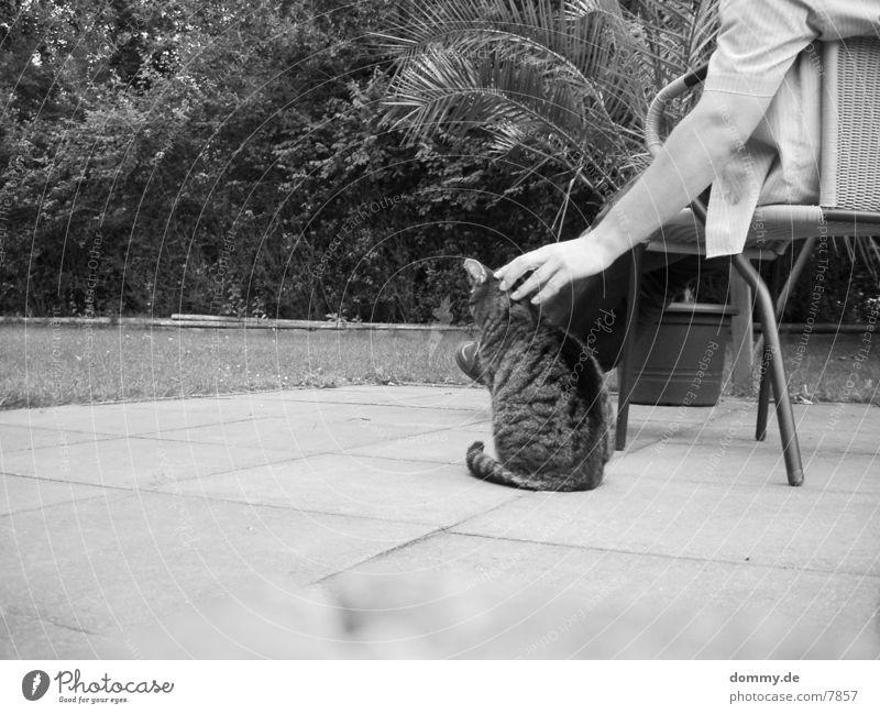 Chillout mit Katze Mensch Erholung Garten Streicheln
