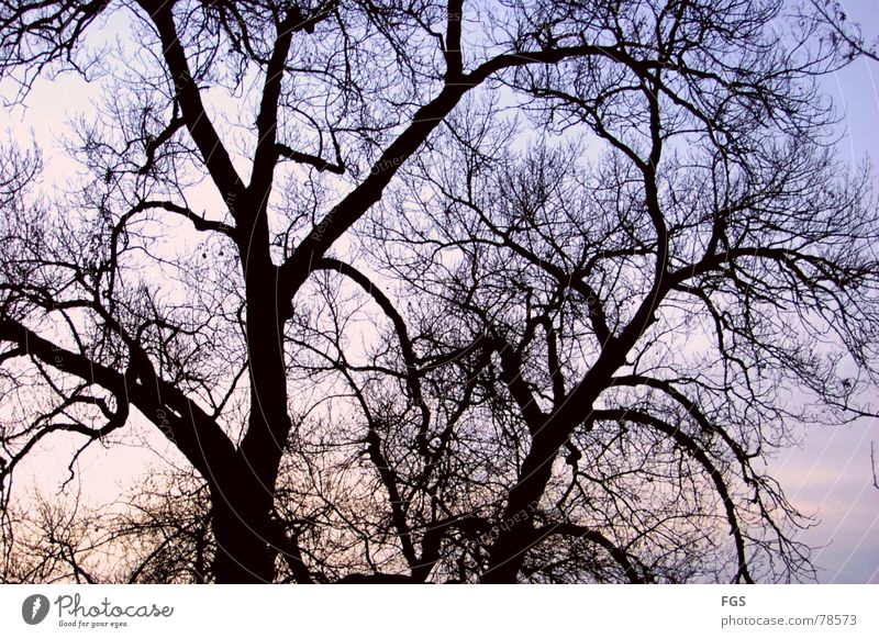 Symbol aus vergangen Tagen Himmel Natur alt Baum Pflanze Wolken ruhig dunkel Herbst Horizont ästhetisch Ast Baumkrone beeindruckend zeitlos
