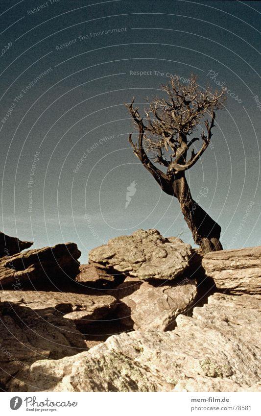 high noon Himmel blau Stein USA Wüste verfallen Amerika Blauer Himmel Dürre vertrocknet Ödland getrocknet Western Erosion welk